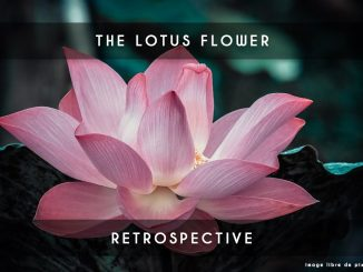 lotus flower retrospective